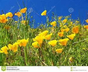 Blumen Im Sommer : sommer gelbe blumen stockfoto bild 768480 ~ Whattoseeinmadrid.com Haus und Dekorationen