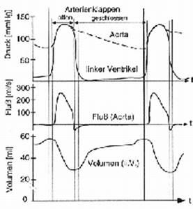 Blutvolumen Berechnen : einflussfaktoren auf den blutdruck ~ Themetempest.com Abrechnung