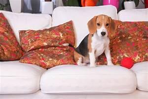 Wohnung Sauber Halten : hunde und katzen in der wohnung halten wohnungs ~ Frokenaadalensverden.com Haus und Dekorationen