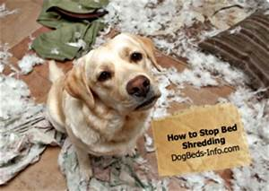 how to stop bed shredding With shred proof dog bed