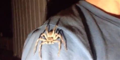How Real Men Deal With Big Spiders (VIDEO) HuffPost UK