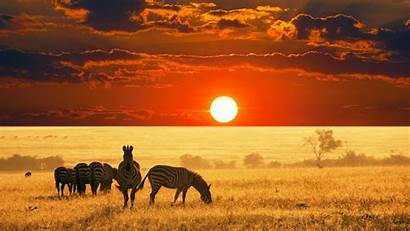 African Background Safari Animals Desktop Laptop Phone