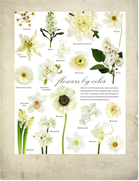 white flowers vintage garden feminine flowers bouquets