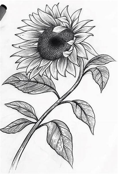 Sunflower Drawing Sunflowers Sketches Pencil Drawings Easy