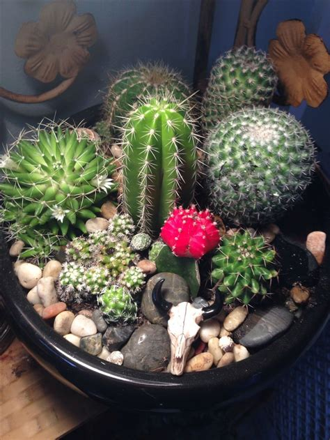 best 25 cactus terrarium ideas only on