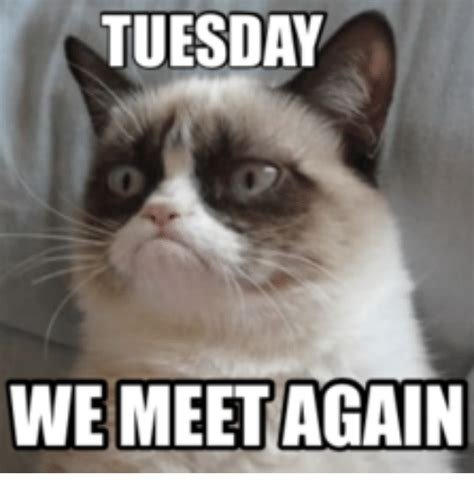 Tuesday Memes Funny - 47 very funny tuesday memes that make you smile greetyhunt
