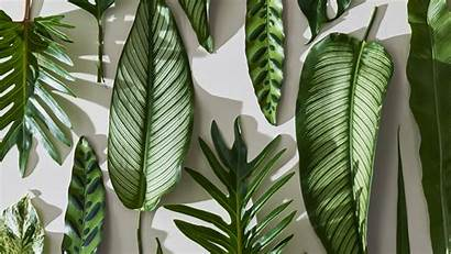 Desktop Tropical Leaves Wallpapers Plant Plants Aesthetic