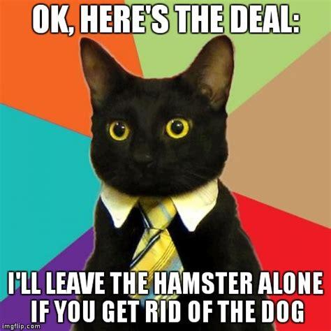 Buisness Cat Meme - business cat meme imgflip