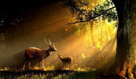 Forest With Animals Wallpaper - buck and doe wallpaper wallpapersafari