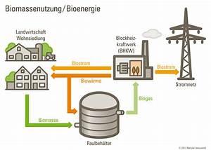Wie Kann Man Energie Sparen : biomasse f r die gro stadt wie kann man biomasse in berlin nutzen deinclube ~ Frokenaadalensverden.com Haus und Dekorationen