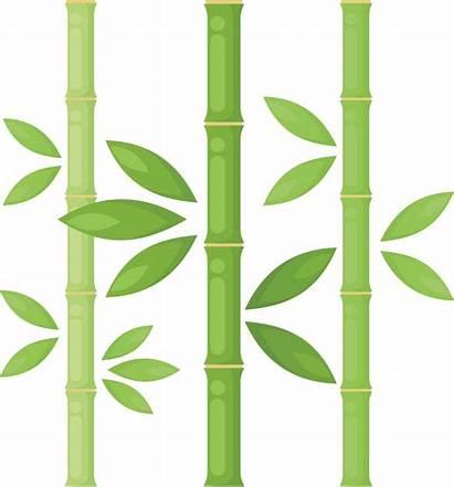 Bamboo Clipart Tree Plant Drawing Clip Eucalyptus