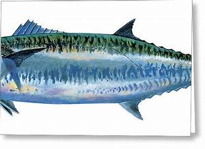 King Mackerel Painting by Carey Chen