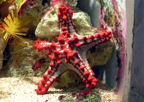 amazing african animals amazing stars  starfish