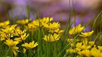 Field Flowers Background Yellow Flower Wild Wallpapers