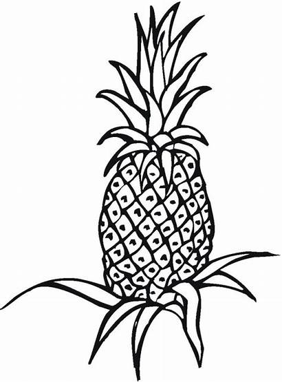 Coloring Pineapple Pages Printable Smart