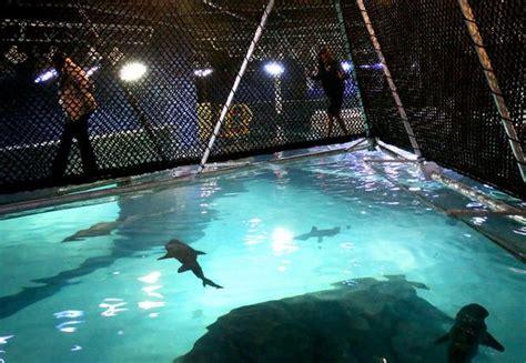 brave  shark bridge puts adventure aquarium guests