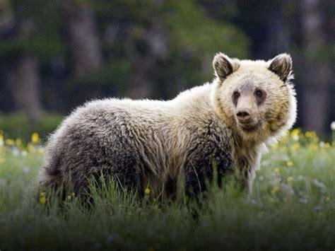 extinction crisis looms  trump attacks endangered