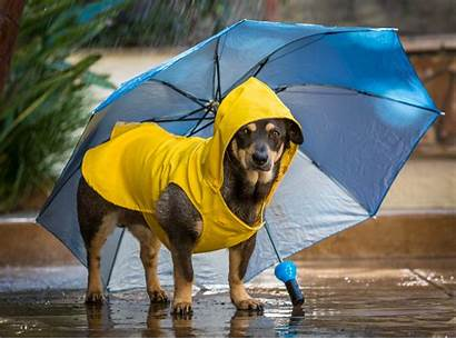 Dog Walking Rainy Rain Essentials Perro Lluvias