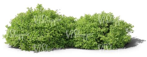 cut  ordinary small bushes cut  trees