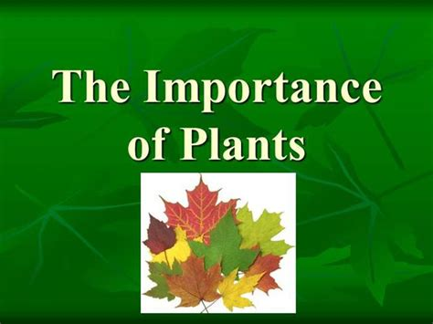 The Importance Of Plants Authorstream