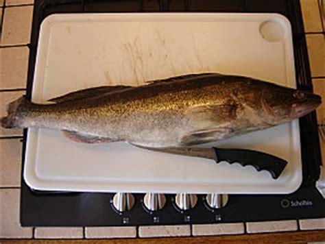 cuisiner le sandre team fish 62 découper des filets de sandres