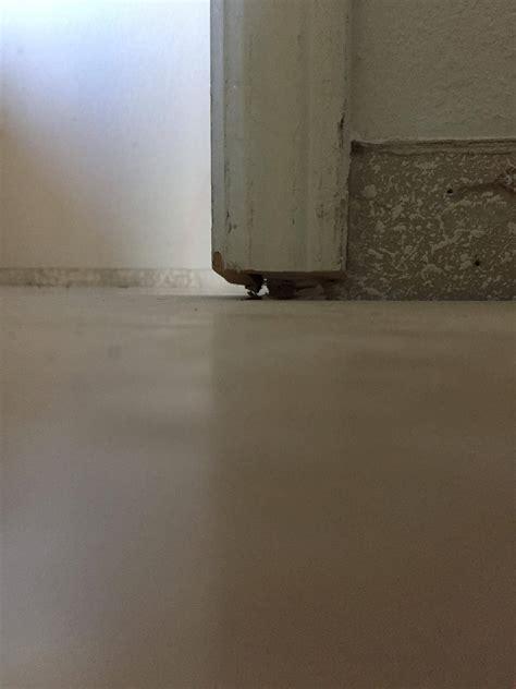 flooring   Door jamb and molding too short after replacing