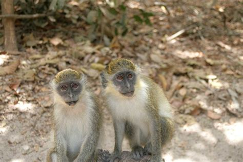 Wildlife In The Gambia