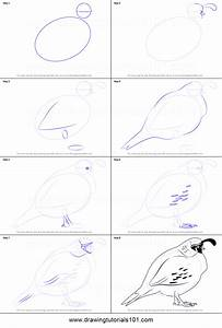 How To Draw A Quail Printable Step By Step Drawing Sheet