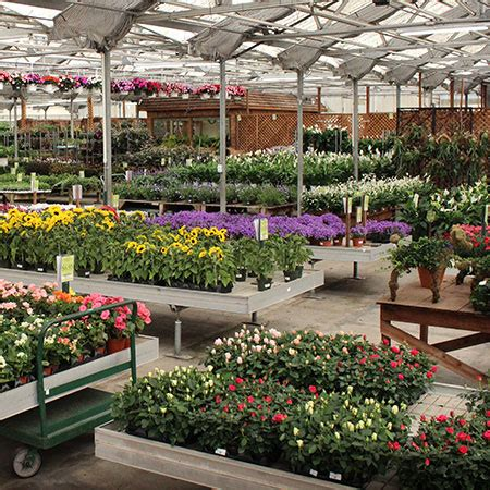 wholesale center indoor plants flowers herbs  moon bay