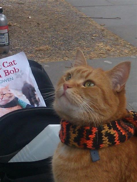 bob cat named street cats ginger cute history kittens amazing bobs names kitten streetcat scarf tale hubpages kitty bobcat orange