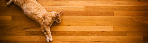will cats on hardwood floors how to get cat urine smell out of hardwood floors get