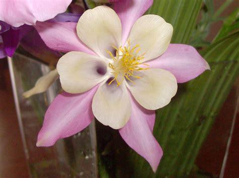 di fiori un mazzo di fiori quot libroaperto quot