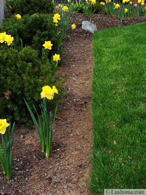 spring garden design  spring flower beds  yard
