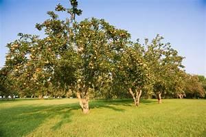 Apfelbaum Hochstamm Kaufen : apfelbaum dieser pflanzabstand ist einzuhalten ~ Orissabook.com Haus und Dekorationen
