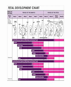 7  Unborn Baby Growth Chart Templates