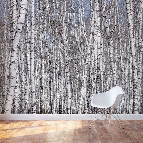 white birch trees wall mural