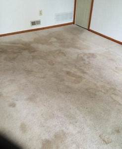 carpet cleaning atlantic county nj by extreme floor care With extreme floor care