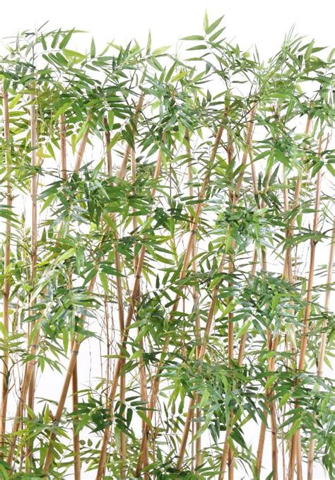 haie artificielle bambou int 233 rieur h 185cm vert
