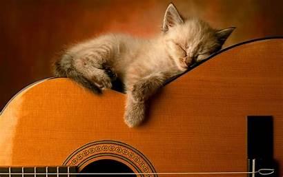 Guitar Sleep Wallpapers Kitty Desktop Pixelstalk Screen