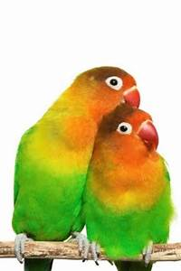 peartreedesigns: Beautiful Natural Colours Love Birds ...
