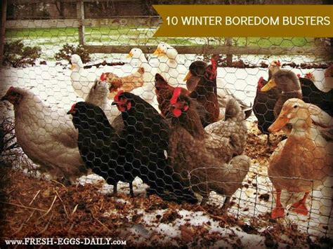 127 Best Images About Backyard Chicken Care & Health On Pinterest