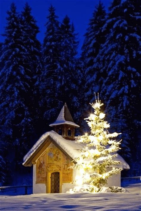sparkling tree   snow pictures   images