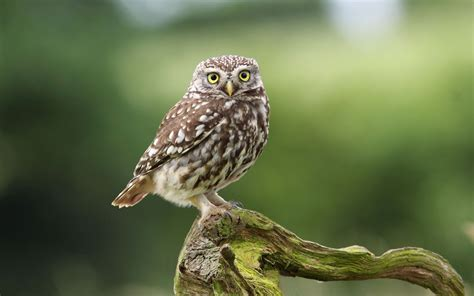 Background Digital Owl Wallpaper by Owl Wallpapers Best Wallpapers