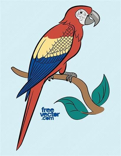 Parrot Freevector Clip Parrots Exotic Graphics Facegfx