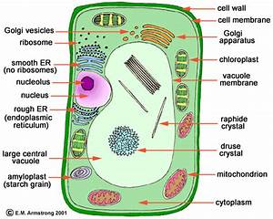 A Cell Is Like Disneyland
