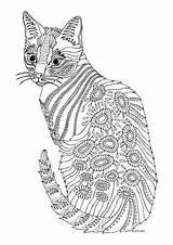 Coloring Pages Cat Animal Detailed Printable Colouring Dog Mandala Sheets Box Rocks Young Want sketch template