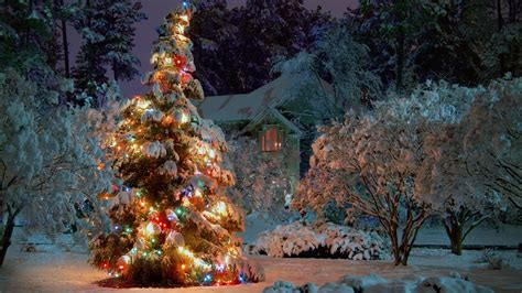 1920x1080 outdoor christmas tree desktop pc and mac wallpaper