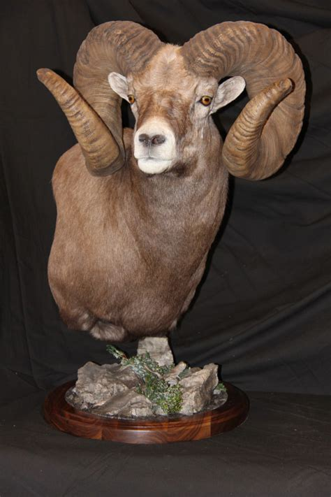 artistic taxidermy game heads