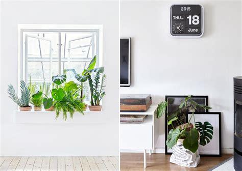 plantes de bureau pour la nouvelle decoration de mon bureau