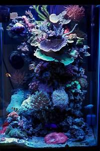 Die Besten Aquarien : die besten 25 salzwasser aquarien ideen auf pinterest ~ Lizthompson.info Haus und Dekorationen
